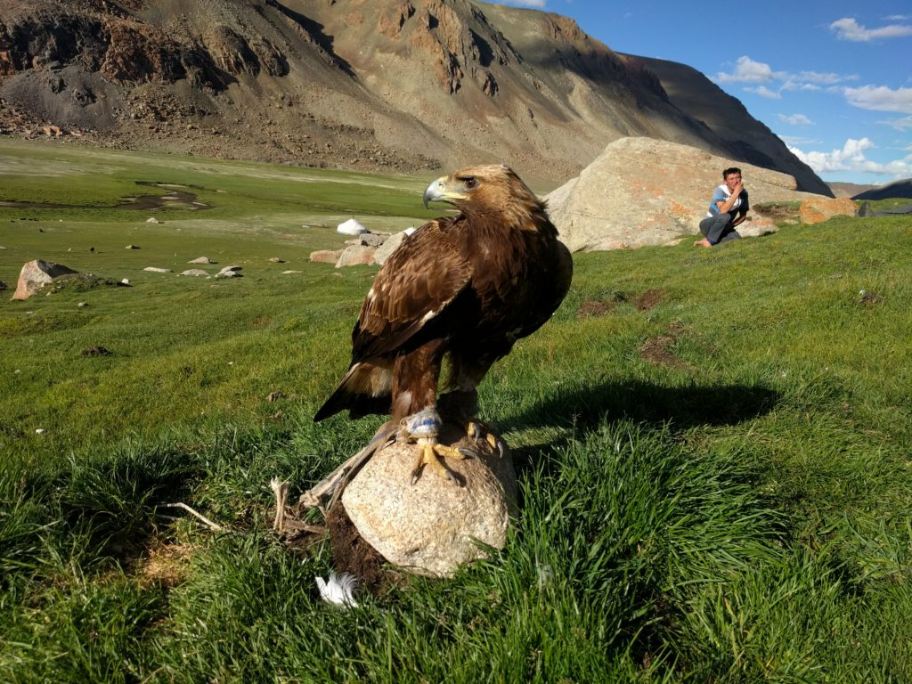 Bayan Olgii Golden Eagle