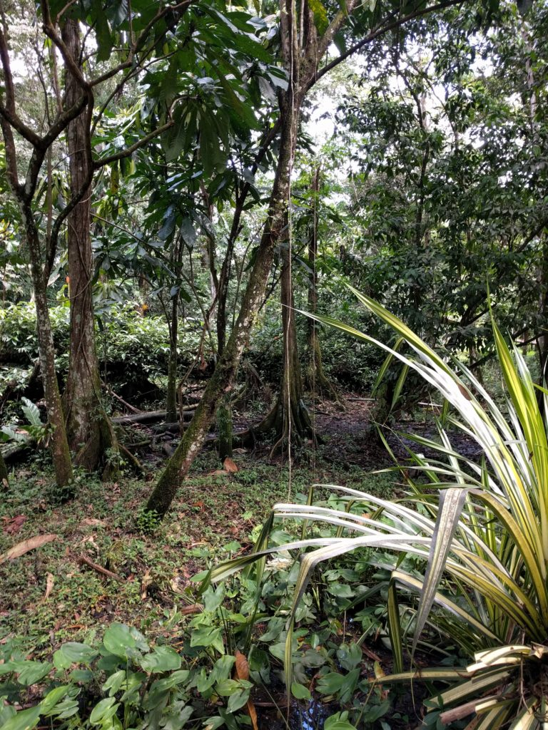 Guatemalan Jungle