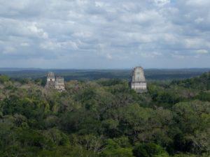 Tikal Canopy Shot